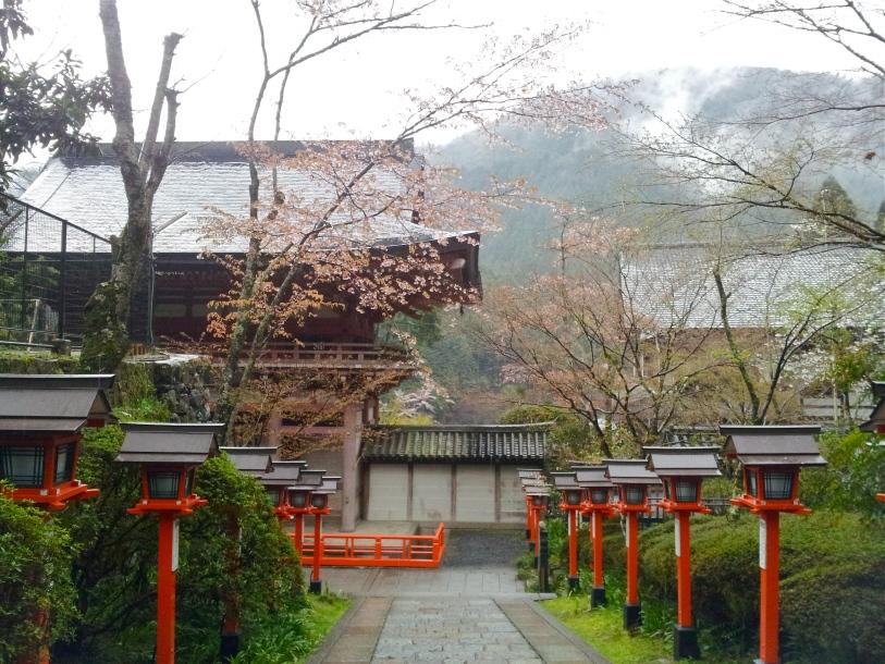 Kurama 24